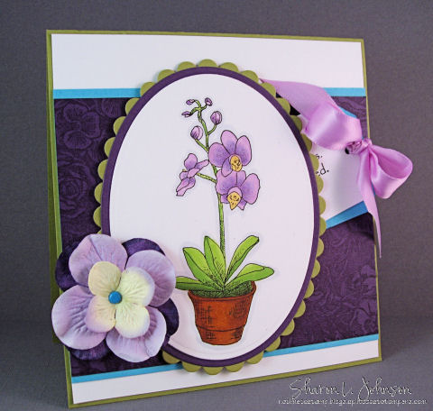 cc179-orchid-pull-out-480-wm-notime.jpg