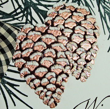 dcnl-908-360-pinecone-closeup.jpg